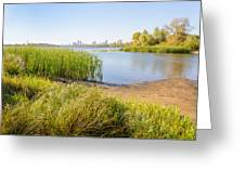 Herbs And Reeds Close To The River Greeting Card