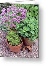 Herbs In Pots Greeting Card