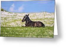 Herd 41 Greeting Card