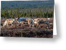 Herd Of Broad Pass Greeting Card