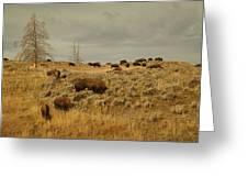 Herd Of Buffalo Greeting Card