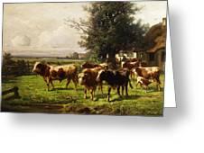 Herd Of Cows Greeting Card