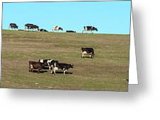 Herd Of Cows Grazing On A Hill, Point Greeting Card