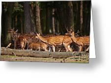 Herd Of Deer In A Dark Forest Greeting Card