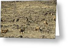 Herd Of Elk   #3218 Greeting Card