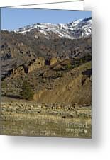 Herd Of Elk   #7740 Greeting Card