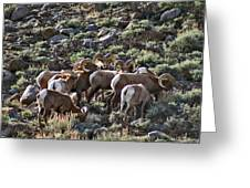 Herd Of Horns Greeting Card