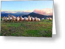 Herd Of Sheep In The Sunset Greeting Card