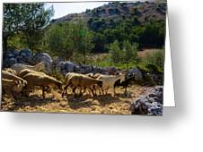 Herd Of Sheep In Tuscany Greeting Card