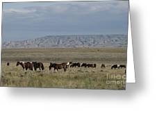 Herd Of Wild Horses Greeting Card by Juli Scalzi