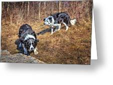 Herder And Herded Greeting Card