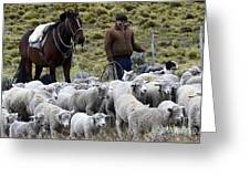 Herding Sheep Patagonia 3 Greeting Card