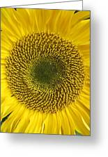 Here Comes The Sun.... Greeting Card