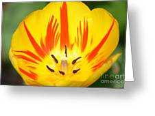 Here Comes The Sun Tulip Greeting Card