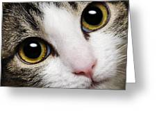 Here Kitty Kitty Close Up Greeting Card