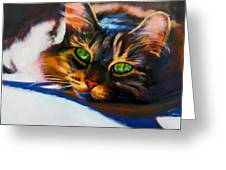 Here Kitty Kitty Greeting Card