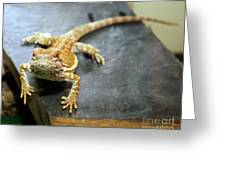 Here Lizard Lizard Greeting Card