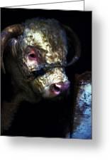 Hereford Bull 2 Greeting Card