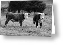 Hereford Portrait V In Black And White Greeting Card by Suzanne Gaff