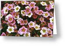 Here's Flowers For You Greeting Card