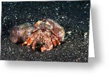 Hermit Crab With Anemone Greeting Card