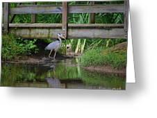 Heron 14-2 Greeting Card