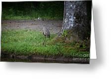 Heron 14-4 Greeting Card