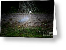 Heron 14-6 Greeting Card