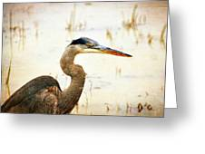 Heron 33 Greeting Card by Marty Koch