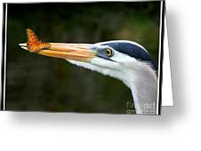 Heron And Butterfly Greeting Card