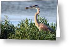 Heron And Crayfish 2029 Greeting Card