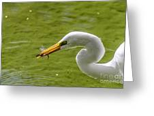Heron And Dragonfly Greeting Card