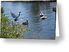 Heron And Pelicans Greeting Card