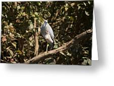 Heron At Katherine Gorge Greeting Card