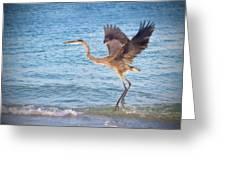 Heron Boca Grande Florida Greeting Card by Fizzy Image
