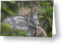 Heron Chick Greeting Card