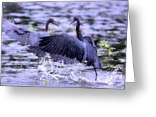 Heron Encounter - Battle - Fight Greeting Card