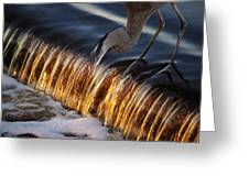 Heron Fishing At The Weir Greeting Card