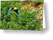 Heron Flies Over Oak Creek In Red Rock State Park Sedona Arizona Greeting Card