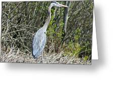 Heron Height Greeting Card