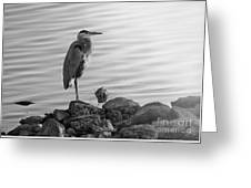 Heron In Black And White Greeting Card