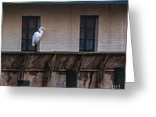 Heron In The Window Greeting Card