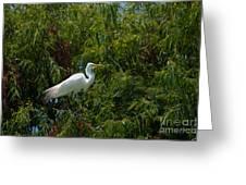 Heron In Tree Greeting Card