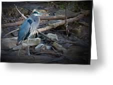 Heron King Greeting Card