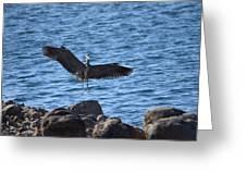 Heron Landing Greeting Card