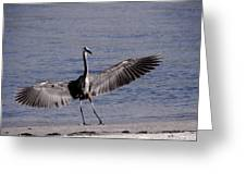 Heron Landing Greeting Card