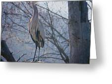 Heron Looking Out Greeting Card