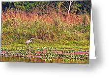 Heron On Shore Of Rapti River In Chitwan Np-nepal  Greeting Card