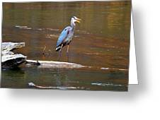 Heron On The Creek Greeting Card