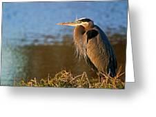 Heron On The Lake Greeting Card